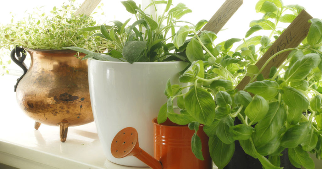 Fresh herbs on window